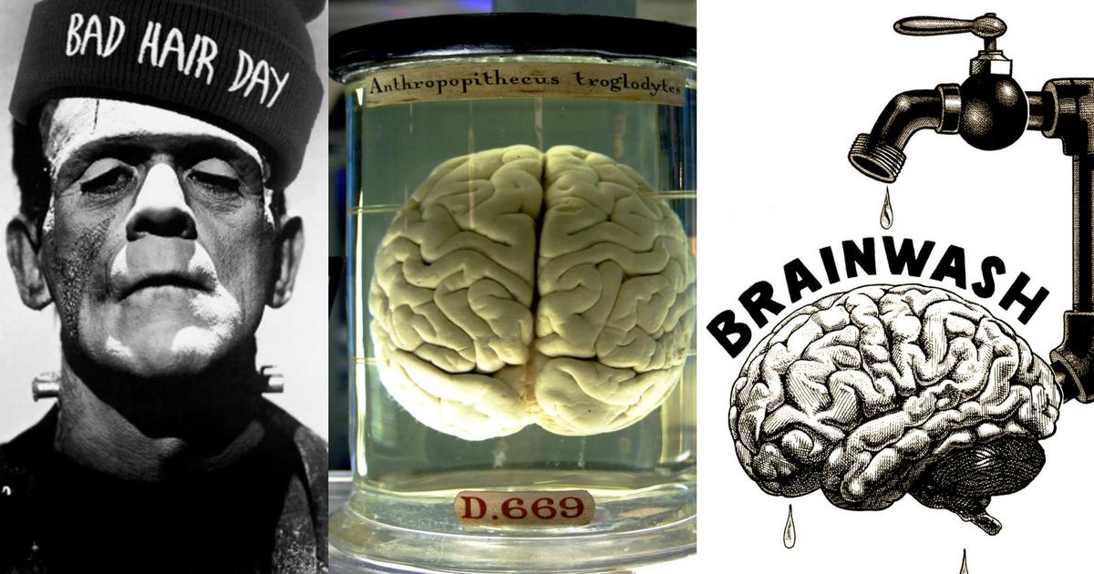 PED mozog - share obr